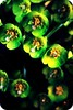 New life (bkiwik) Tags: newzealand christchurch plant flower green nature digital canon canterbury nz aotearoa 2009 newbrighton eos400d
