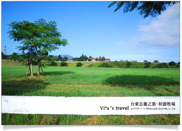 【台東旅遊景點】台東必去景點~初鹿牧場之旅