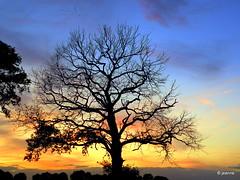 a tree - once struck by lightning (Jeanne Kliemesch) Tags: sunset sky tree nature silhouette geese nikon explore jeanne achterhoek theunforgettablepictures tup2 nikoncoolpixp80 nikonp80 vanagram saariysqualitypictures
