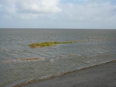 hoog water (blackcharliepho) Tags: pointandshoot dijk noordgroningen kwelder