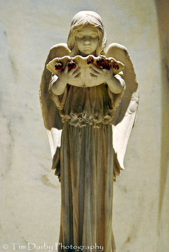 Shell Angel 2