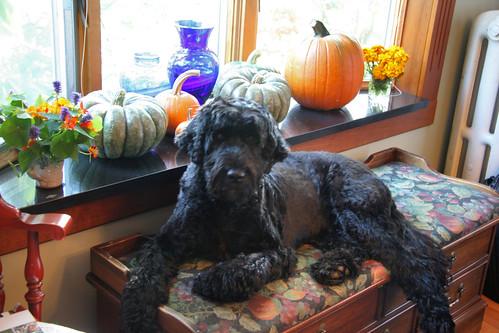 skippy and pumpkins