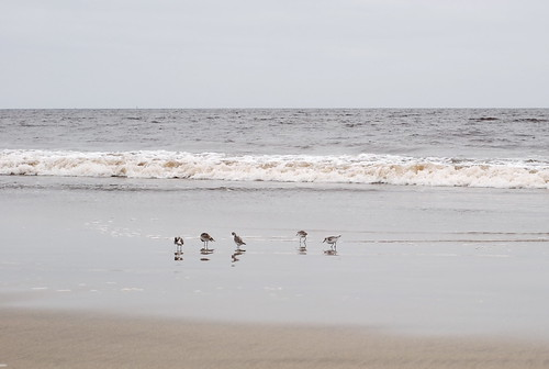 birds in the surf