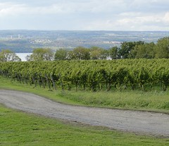 vineyards (lynn.h.armstrong) Tags: camera ontario canada green art nature water lens landscape geotagged outdoors photography landscapes photo vineyard long flickr shot photos finger sony south country lakes peaceful cybershot lynn h armstrong dsc stormont cyber gettyimages sault flickrcom ingleside superzoom attributionnoderivs redbubble redbubblecom ccbynd hx1 dschx1 lynnharmstrong requesttolicense requesttolicence