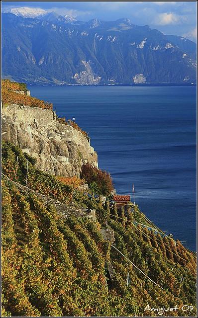 nature europe léman vigne préalpesvaudoises conglomérat