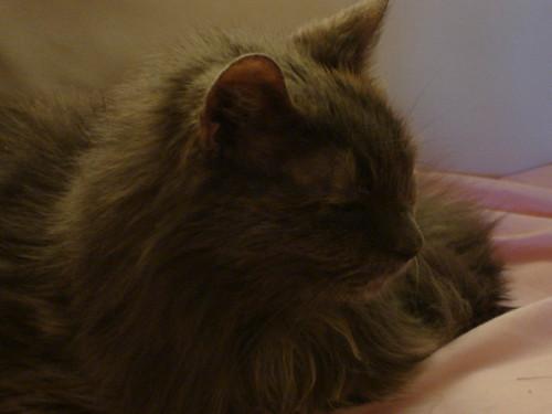 Cat 1208 007