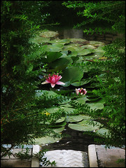 Spain - the garden (alk_is) Tags: espaa flower green pool garden spain lotus andalucia alhambra  homersiliad