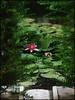 Spain - the garden (alk_is) Tags: españa flower green pool garden spain lotus andalucia alhambra ισπανια homersiliad