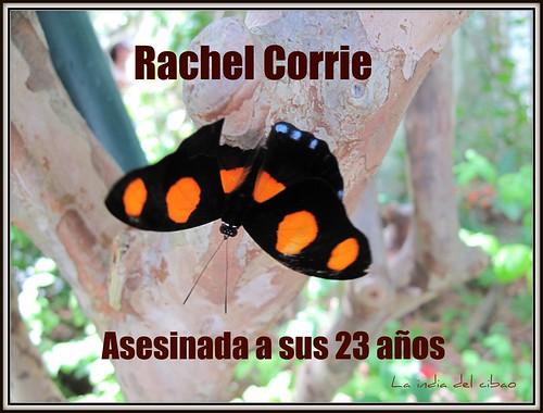 Dedicada a Rachel Corrie , quien  apenas a sus 23 años  fue asesinada el 15 de marzo del 2003  por el conductor de una aplanadora militar israelí.  Corrie vivio por un sueño y lo defendio hasta la muerte.