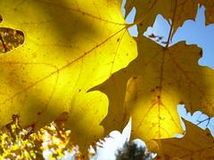 autumnal (dmixo6) Tags: november autumn canada macro nature muskoka 2009 dugg dmixo6