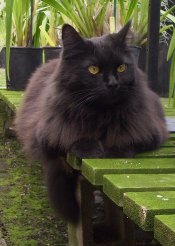 Black Pepper the Greenhouse Cat