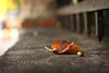 rest:  330/365 (helen sotiriadis) Tags: autumn macro closeup canon fence leaf published dof bokeh perspective depthoffield 365 canonef50mmf14usm canoneos40d toomanytribbles updatecollection