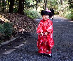 Shichi-go-san (Umberto Bellitto) Tags: november 3 japan temple tokyo nikon 5 7 lovely shichigosan umberto giappone meiji d3 七五三 sevenfivethree bellitto