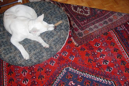 Happy's corner of the rug