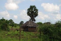 DSC_0177 (drs.sarajevo) Tags: trincomalee morawewa kithellutu returnsinghalese