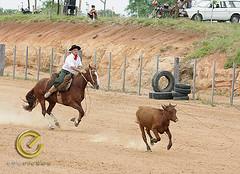 IMG_6091 (Edu Rickes) Tags: brazil horses brasil caballos cow cavalos rs riograndedosul sul tradicionalismo rodeio gaúchos beautifulshots piratini gineteada brazilianphotographers fotógrafosbrasileiros tirodelaço todososdireitosreservados fotógrafosgaúchos culturagaúcha edurickes belasimagens southofbrasil edurickesproduçõesfotográficas copyright©2010 fotografiaslegais