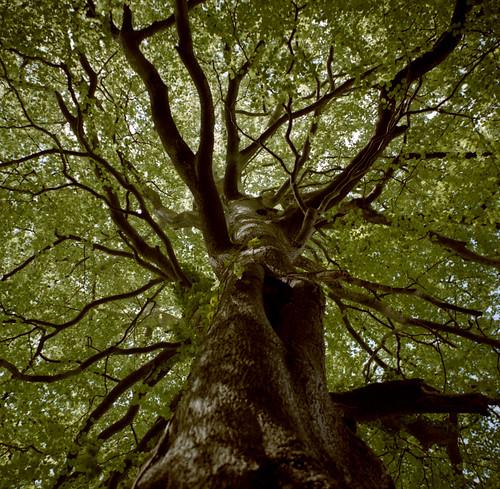 フリー画像| 自然風景| 樹木の風景|         フリー素材|