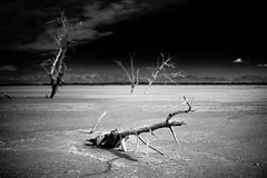 Otherworld (Jeff Engelhardt) Tags: monochrome saltonsea