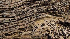 Driftwood (Anthony Leveritt) Tags: wood art driftwood jekyllisland nikond90 afsnikkor2470mmf28ged anthonyleverittphotography