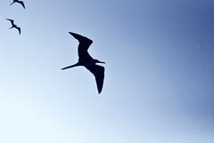 (Javier Volcan) Tags: blue sky azul ave cielo tres trio threesome bord gabiota jdvolcan jdvolcangmailcom