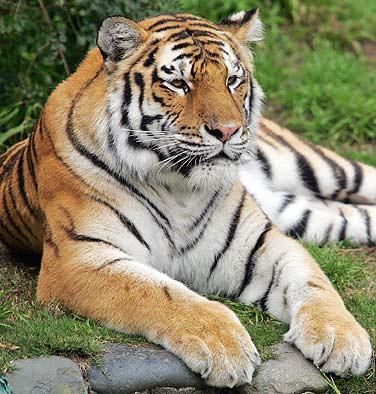 Hikmah Larangan Memakan Binatang Buas « Mahawarta