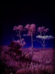 Triplets (Colin_Bates) Tags: blue trees mountains texture gum infrared hoya r72 mtbanks