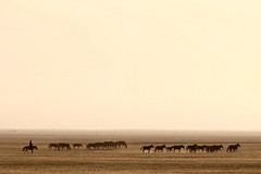 Who's gonna to ride your wild horses? (... Arjun) Tags: travel wild sky horses 15fav panorama man topf25 monochrome 1025fav contrast 510fav u2 landscape iso100 alone skies ride zoom song wide dramatic 100v10f panoramic mongolia 2550fav 50100fav silkroad fullframe f56 drama 2009 gobi unforgiven 200mm achtungbaby govi songtitle dirttracks bluelist unforgiving canonef70200mmf4lusm  canoneos5dmarkii southmongolia  canon5dmarkii whosgonnatorideyourwildhorses gettyvacation2010