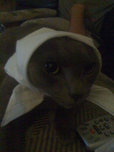Babushka cat
