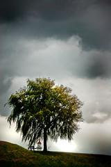tree (afslag7) Tags: lighthouse holland tree netherlands dutch birds clouds bench day cloudy dramatic hellevoetsluis darksky