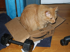 Catman getting meta (David No) Tags: cat box norbert kitteh catman lolcatz boxmaster