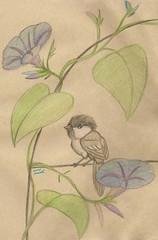 9.26.09 - Chickadee on Morning Glory