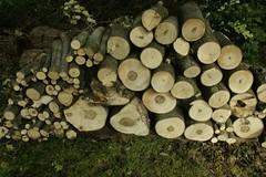 _MG_6514.JPG (zimbablade) Tags: trees sleepyhollow dougmiller videopoem