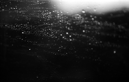 tears rain