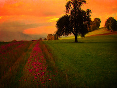 Falls colours (ceca67) Tags: flowers autumn tree fall nature field switzerland photos legacy tistheseason ourtime jesen altruistic theworldwelivein worldbest updatecollection daarklands flickrvault magicunicornverybest selectbestfavorites magicunicornmasterpiece trolledproud adrinnesmagicalmoments imagofabulae sbfmasterpiece