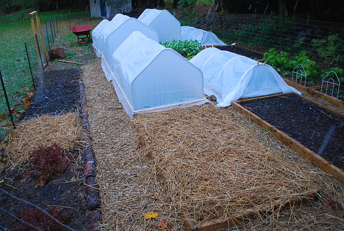 garlic beds