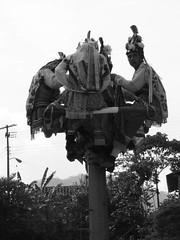 Indigenas_18 (Gionitz_PIC) Tags: cultura indigenas danzantes tradicion rostros volador trajestípicos voladoresdepapantla culturamexicana trajesregionales fiestasregionales totonacos rostrosdemexico rostrodemexico