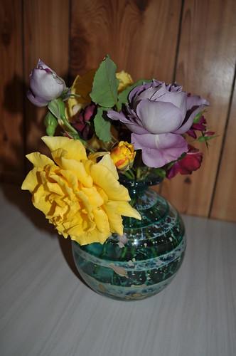 garden roses 879
