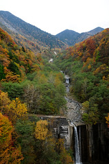 20091025 Kita-Alps Bridge 2 (BONGURI) Tags: bridge nikon autumncolors  takayama  gifu  coloredleaves d300   okuhida    kitaaplsbridge