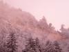 """raggio di sole ("""" paolo ammannati """") Tags: neve verna casentino effettinaturali fotoconneve panoramaconneve"""