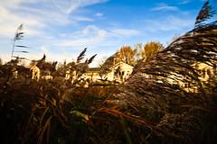 Grass (RichardTerborg) Tags: blue autumn sky orange grass amsterdam clouds wide sigma 1020mm leafs artis muiderpoort sigma1020mm canon400d