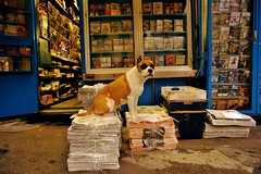 Sunday Morning (pedale.forchetta) Tags: dog color cane streetphoto watchdog 2035mmf28d d700 milanomilanesi