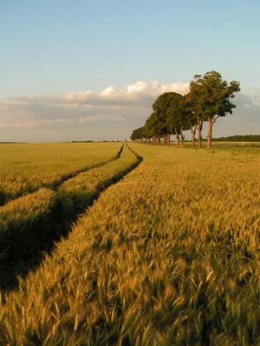 paysage du Hurepoix