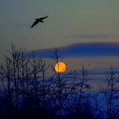 Alaska Anchorage Morning Full Moon In December, 2009 (MarculescuEugenIancuD60Alaska) Tags: alaska anchorage soe imagepoetry impressedbeauty magicalbeauty theperfectphotographer goldstaraward saariysqualitypictures oracoob outstandingromanianphotographers