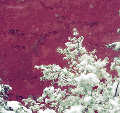 *snow*** (ShanLuPhoto) Tags: china winter red snow beijing forbiddencity 雪 loolooimage