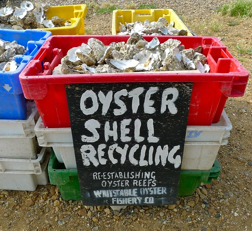 bucket of oyster shells labelled for recycling