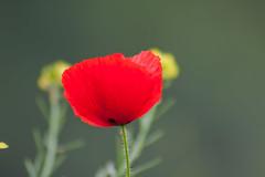 IMG_4004.jpg (snellinkPJ) Tags: rose forest canon 50mm herfst roos bos zwart wit roze koud kleuren