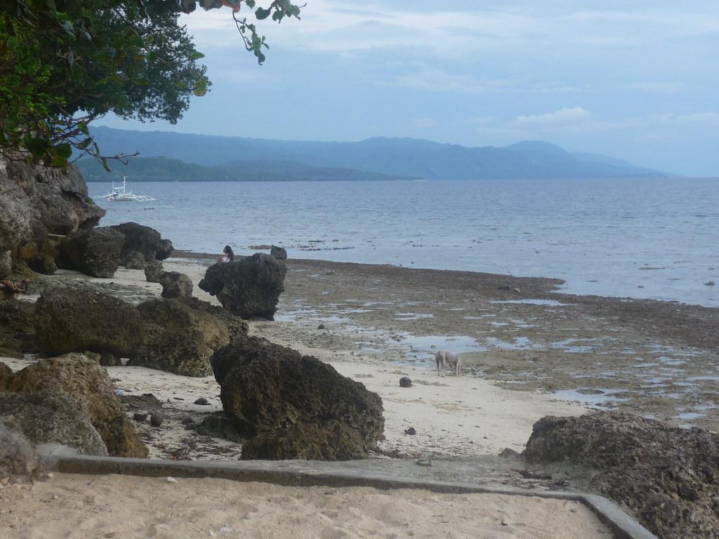 Cebu-Moal Boal (94)