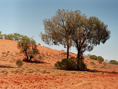 vIY (zsozso68) Tags: red tree australia heat outback zenit northern territory