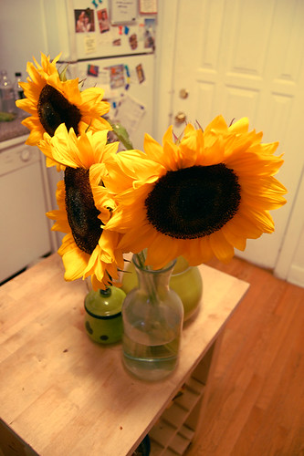 pretty sunflowers