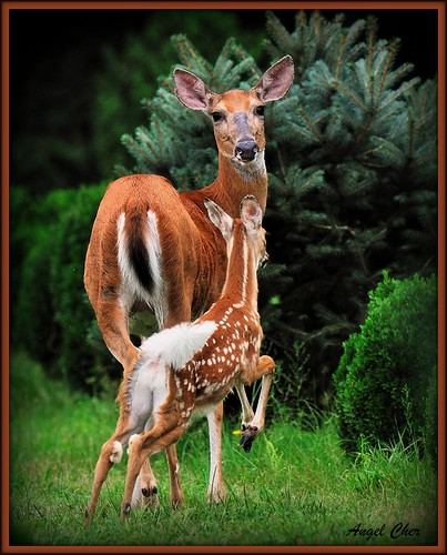 Momma Doe: Zoey and Fawn